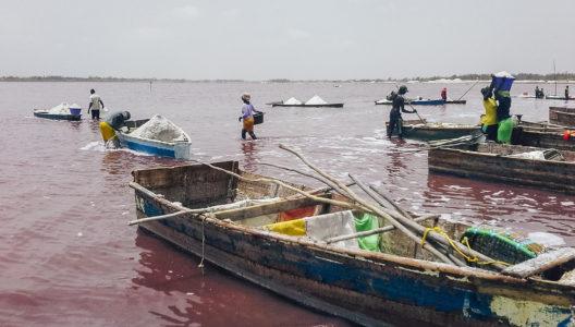 Różowe jezioro w Senegalu