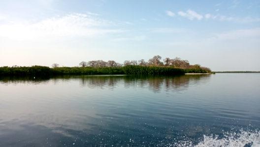 Delta rzeki Saloum